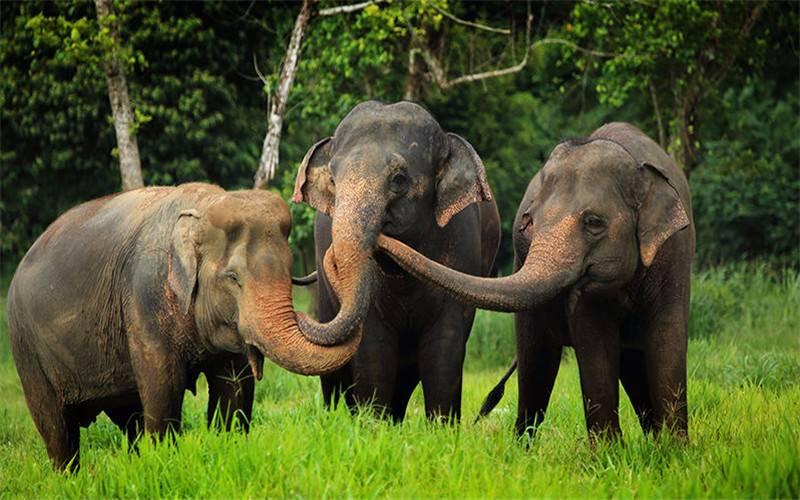 Wild elephants in northern Thailand.