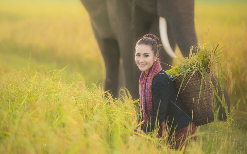Top 10 Places No Riding Elephants in Thailand