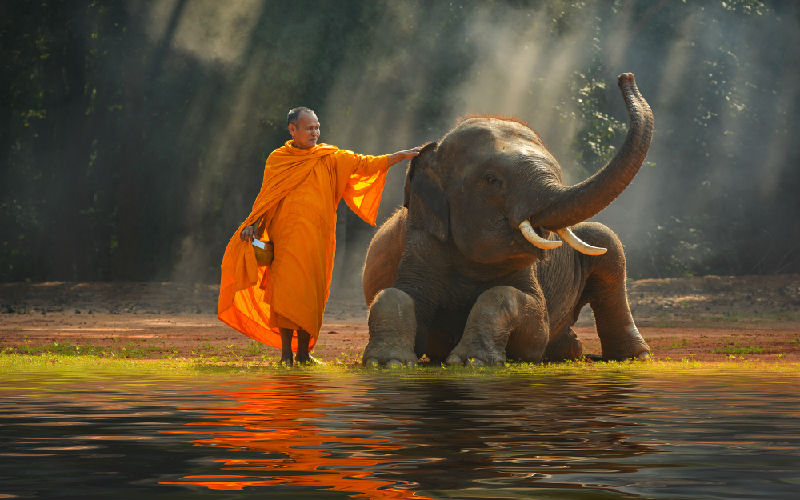 Top 10 Elephant Conservation in Phuket