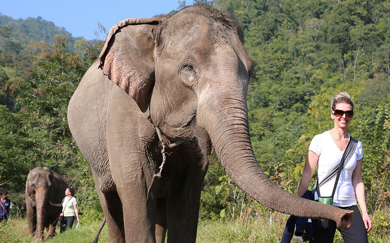 Top 10 Elephant Trekking in Chiang Mai