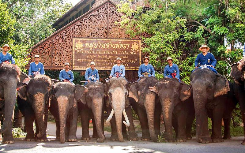 Top 10 Elephant Tour in Thailand