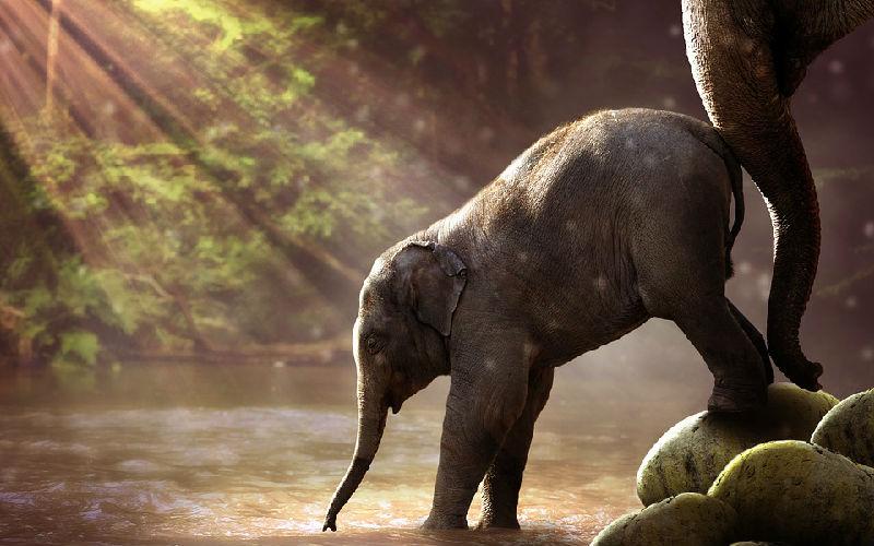 Top 10 Thai Elephant Care Center