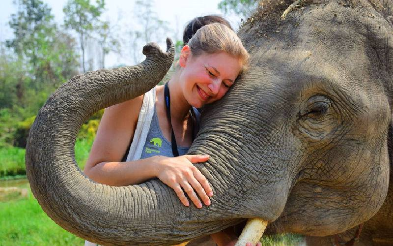 Top 10 Elephant Sanctuary near Bangkok