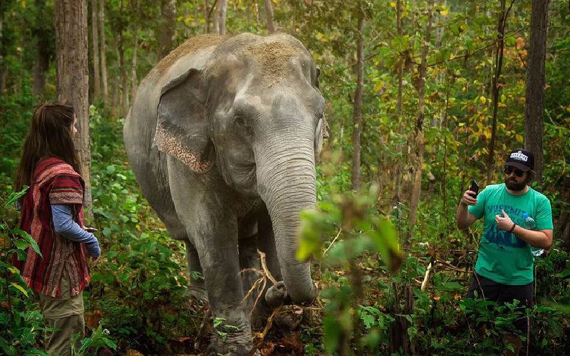 Top 10 Places Seeing Wild Elephants in Thailand