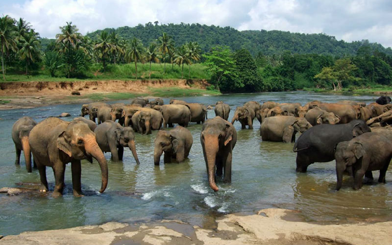 Top 10 Elephant Camp in Chiang Mai
