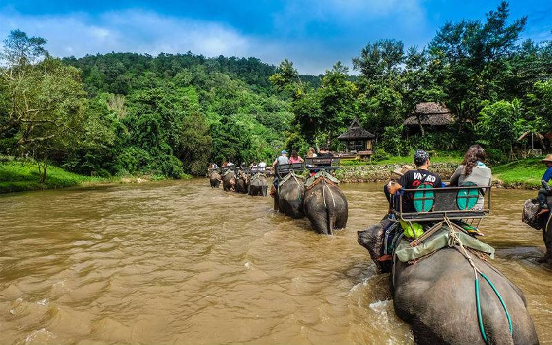 Top 10 Elephant Riding Park in Chiang Mai