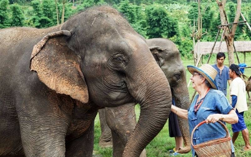 Top 10 Elephant Experience in Bangkok