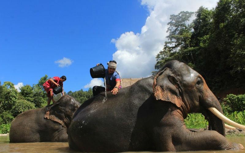 Top 10 Best Thai Elephant Home
