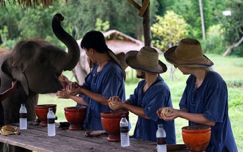 Top 10 Elephant Farm in Chiang Mai