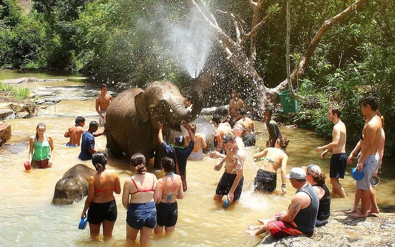 Where You Can Have an Elephant Bathing in Phuket