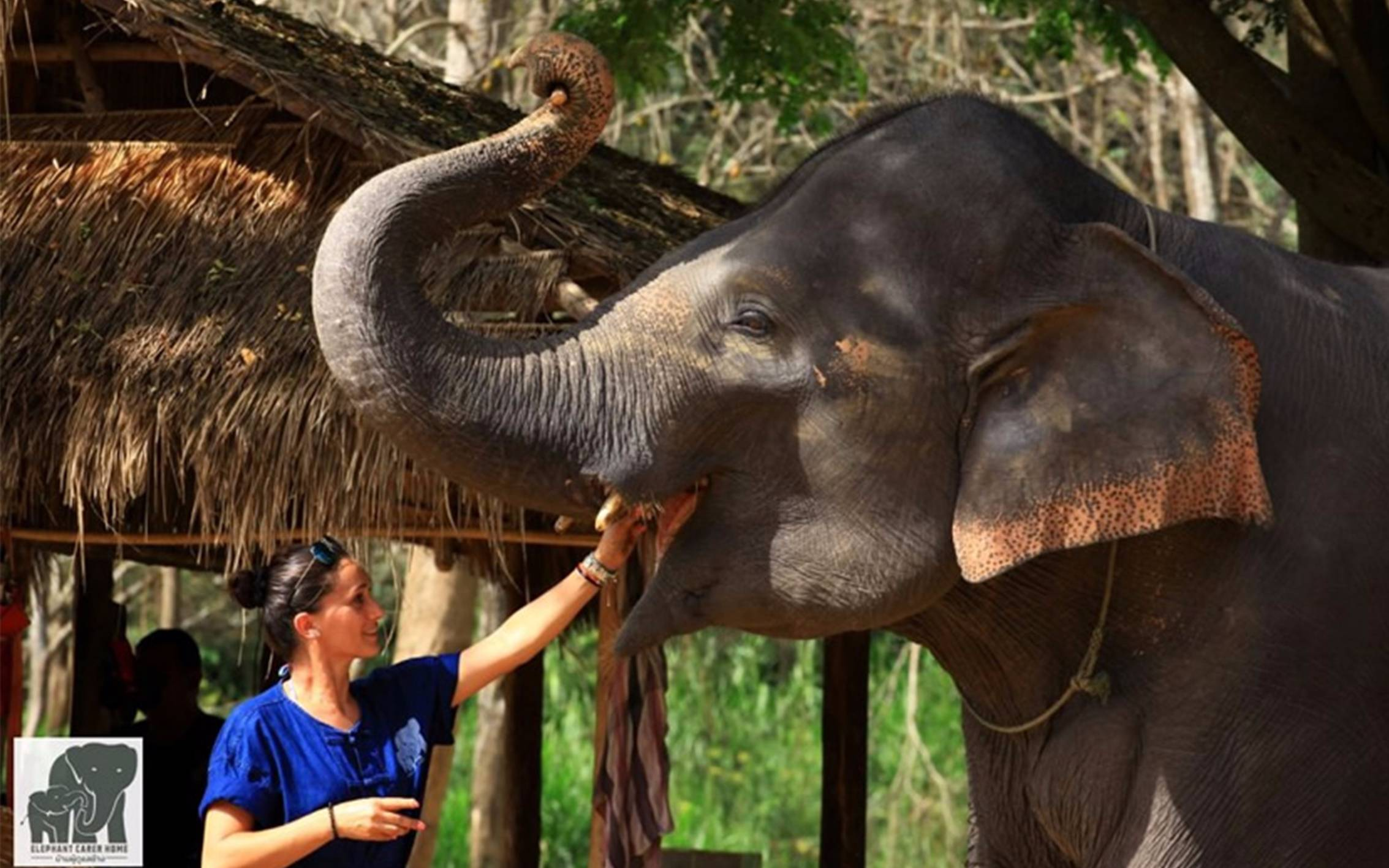 Top 5 Ethical Elephant Park in Chiang Mai