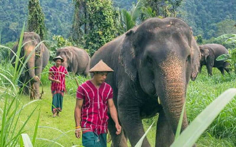 Top 10 Elephant Nature Park in Phuket