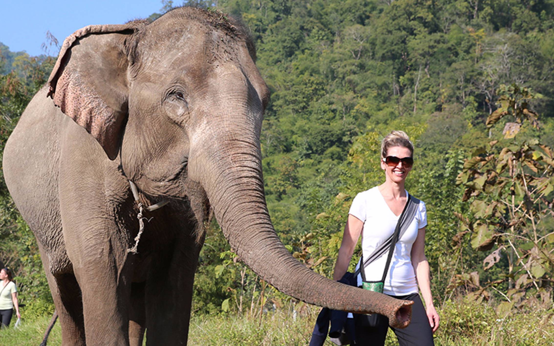 Best Elephant Tour in Chiang Mai