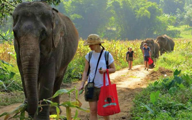 Elephant Nature Park: Best Elephant Sanctuary Tours Guides