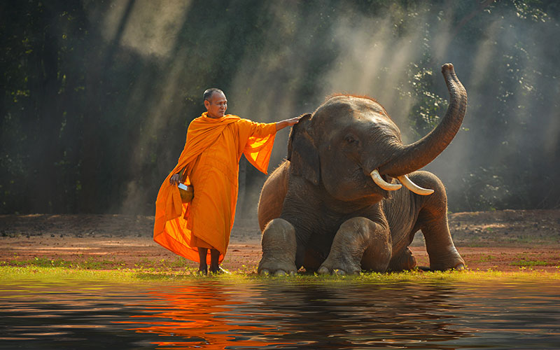 Thai Elephant Protection