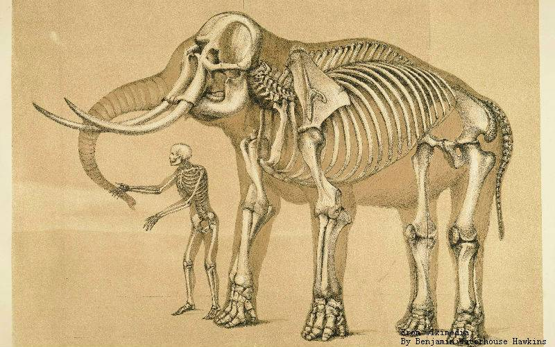 Look at this image of elephant's bone and spine. It shows exactly how stupid riding an elephant.