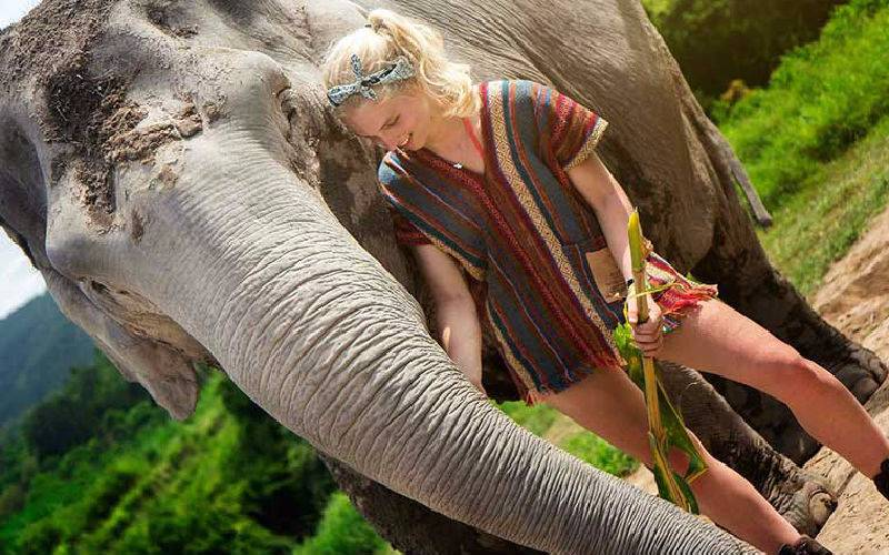 Elephant Jungle Sanctuary ​Chiang Mai