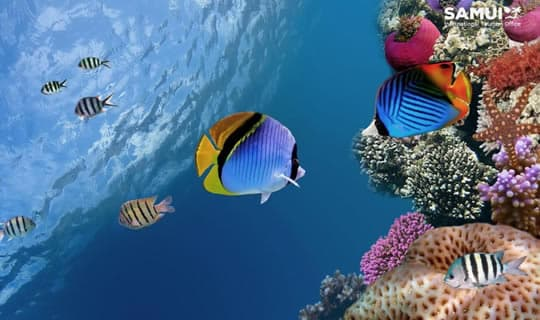 Coral Island Snorkeling One Day Tour by Long-Tail Boat with Lunch