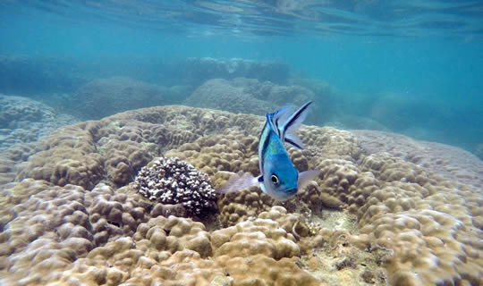 Talu Island Snorkeling One Day Tour by Speedboat with Lunch from Hua Hin