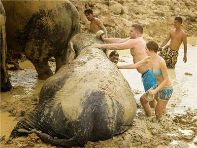 Elephant Mud Spa