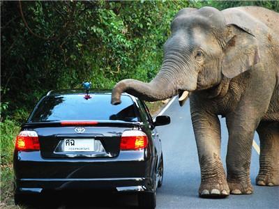 Driving Safari