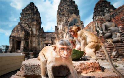 Prang Sam Yot(Monkey Temple)