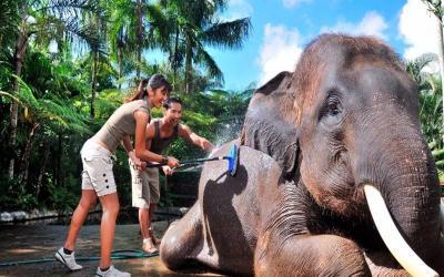 Mason Elephant Wash