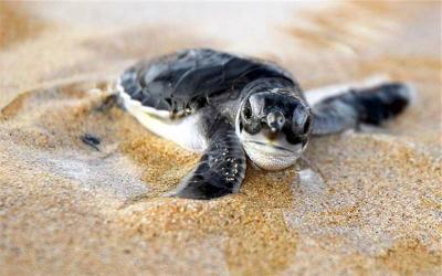Turtle Information Center