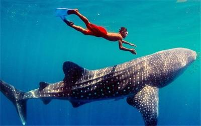 Watch Whale Shark